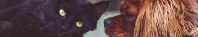 ペット業界の転職